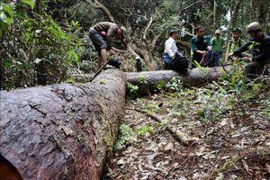 Khởi tố vụ phá rừng ở huyện Kon Plông, Kon Tum