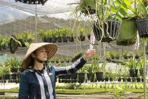 Lâm Đồng: Sắm xe hơi, xây nhà lầu nhờ trồng hoa lan