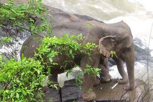 Thêm 5 con voi chết ở vườn quốc gia Thái Lan