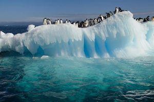 Điều gì xảy ra nếu băng 2 cực tan hết sau một đêm?