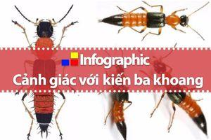 Xử trí khi dính độc kiến ba khoang