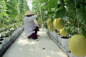 Thu hút đầu tư phát triển kinh tế nông thôn