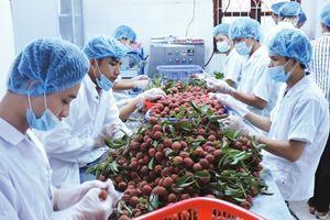 Xuất khẩu nông sản Việt Nam: Chuyên gia phân tích nghịch lý