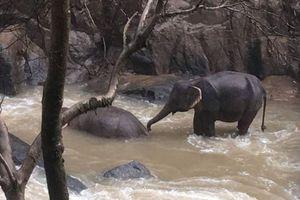 Thái Lan đóng cửa thác nước Haew Narok sau khi 6 con voi chết tại đây
