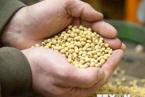 Báo Anh: Trung Quốc sẽ tăng nhập khẩu đậu tương Mỹ thêm 3,25 tỷ USD