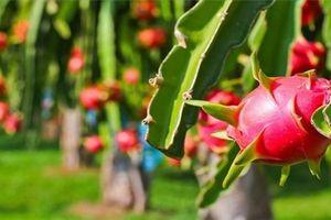 Lý do khiến nông sản Việt chưa thoát 'đáy' trong chuỗi giá trị toàn cầu