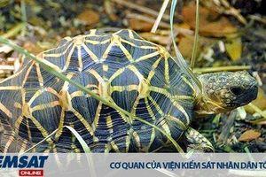 Ấn Độ: Hơn 11.000 cá thể rùa hoang dã bị buôn lậu mỗi năm