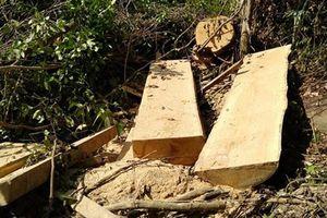 Phú Yên: Rừng Hòn Đác bị khai thác trái phép