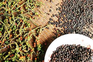 Cảnh báo doanh nghiệp xuất khẩu sang Senegal
