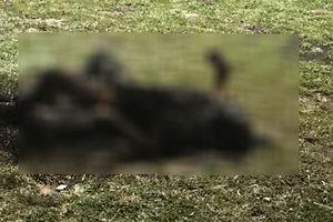 Phát hiện thi thể người đàn ông cháy đen trong công viên ven biển