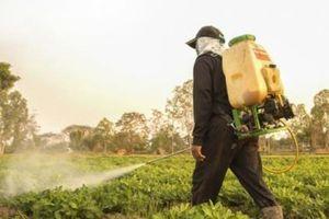 Đồng Tháp: Cần thông tin chính thức về chất lượng thuốc trừ sâu Schesyntop 500WG