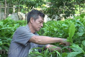 Mùa dổi bội thu đem lại giá trị kinh tế cho người dân vùng cao