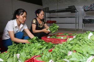 Hỗ trợ phụ nữ khởi nghiệp từ mô hình kinh tế tập thể ở Bắc Ninh