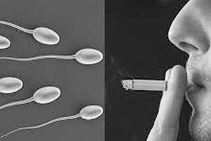 Hút thuốc lá – thủ phạm làm giảm chức năng sinh sản