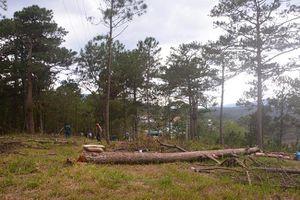 Táo tợn phân lô bán đất rừng ở Đà Lạt