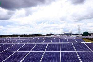 Sẽ giải tỏa hết công suất điện mặt trời tại Ninh Thuận trong quý 2/2020