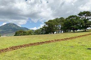 Hoàn lại đất bị lấn chiếm tại điểm du lịch Đồi cỏ hồng Lâm Đồng