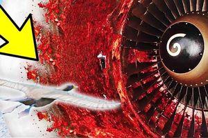 Máy bay của Vietjet chậm chuyến 13 tiếng vì va phải chim trời