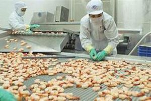 Xuất khẩu tôm sang Trung Quốc tăng trưởng trở lại