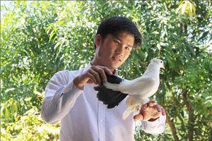 Thừa Thiên - Huế: Nuôi bồ câu cảnh hái ra tiền, bán 1 cặp bồ câu thổi kèn giá 2 triệu