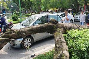 Đối phó với những sự cố giao thông 'trên trời rơi xuống'