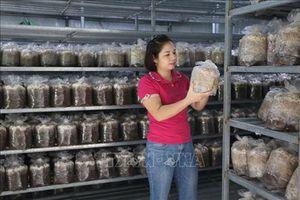 Bắc Kạn: 'Hốt bạc' nhờ trồng nấm an toàn