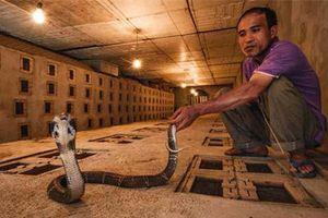 Dựng tóc gáy, lạnh sống lưng với làng tỷ phú nuôi 3 loài rắn độc