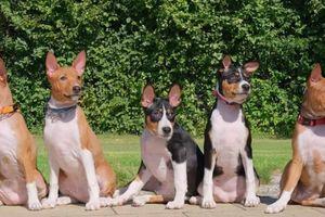 Thái Lan chào đón 8 con chó là 'cháu nội' thú cưng của cố quốc vương