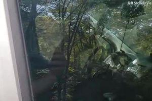 Xe còi inh ỏi, tài xế chạy lại, sửng sốt thấy kẻ đột nhập...