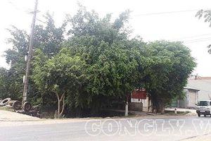 Thanh Hóa: Bất thường trong đền bù giải phóng mặt bằng ở xã Vĩnh Thịnh