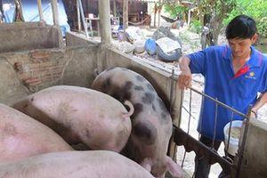 'Giá lợn còn tăng cao nhưng sẽ không để giá tăng quá cao như Trung Quốc'