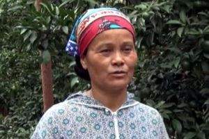 Sơn La: Làm giàu từ trồng cam Vinh