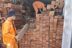 Hải quan Hải Phòng bắt giữ 3 container gỗ quý nhập khẩu trái phép