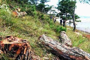 Lâm Đồng mật phục bắt đối tượng phá rừng, chiếm đất