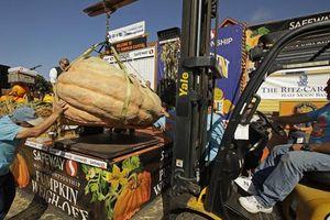 Được thưởng 15.000 USD vì trồng bí ngô nặng gần 1 tấn