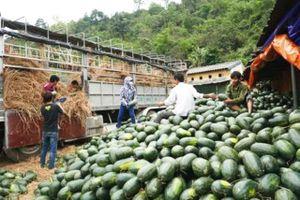 Việt Nam sẽ xuất khẩu 10 sản phẩm nông sản mới sang Trung Quốc