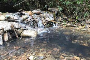 Thủ tướng yêu cầu điều tra, làm rõ nguyên nhân việc nguồn nước sạch sông Đà bị ô nhiễm