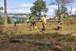 Trồng lại 8.500 cây thông trên đất rừng bị phân lô, lấn chiếm ở Đà Lạt