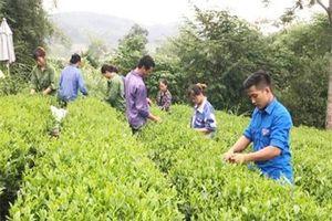 Thái Nguyên: Nung nấu ước mơ khởi nghiệp với mô hình HTX