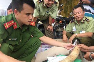 Bình Định: Phát hiện, tạm giữ 17,6 kg vật phẩm nghi là ngà voi