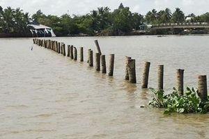 Đóng bãi cọc ngầm trên sông Cổ Chiên không đảm bảo an toàn