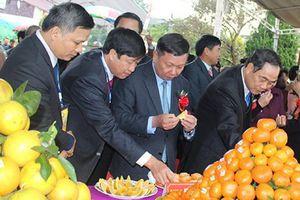 Sắp diễn ra Lễ hội cây ăn quả có múi tỉnh Hòa Bình