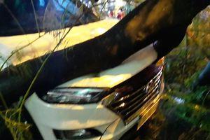 Cây phượng bật gốc đè trúng ô tô và xe máy ở Đà Nẵng