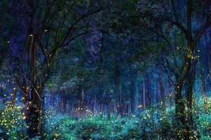 Vũ điệu ánh sáng ở khu bảo tồn đom đóm Mexico