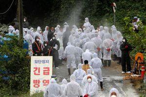 Hàn Quốc điều lính bắn tỉa săn lợn nhiễm bệnh tả châu Phi