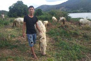 Khởi nghiệp nông nghiệp: Chàng trai 8x xây dựng trang trại ngựa bạch trên 'ốc đảo' Cao Nguyên