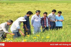 Châu Thành phát triển nông nghiệp ứng dụng công nghệ cao