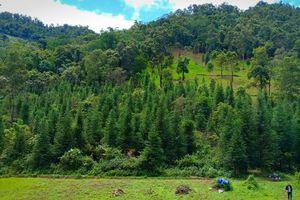 Còn nhiều điểm chưa rõ trong xử lý vụ phá rừng ở Tủa Chùa