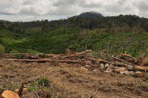 UBND tỉnh Lâm Đồng yêu cầu xử lý nghiêm đối tượng chủ mưu trong vụ phá rừng