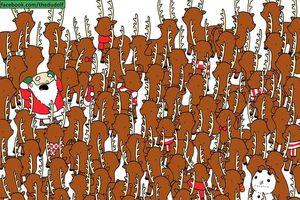 Hầu hết mọi người nhìn nhầm con gấu trong đàn tuần lộc, bạn có phải ngoại lệ?